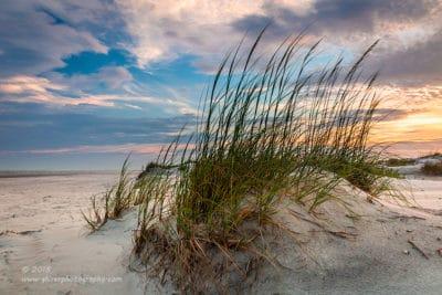 Coastal Mohawk