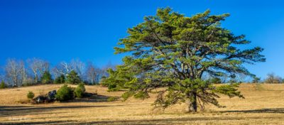 Doughton Meadow