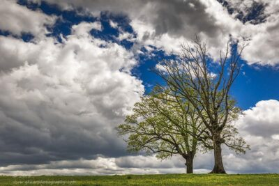 """Peeking Into Spring"",   Canon 5D Mk3, 24-70mm f/2.8L Mk2"