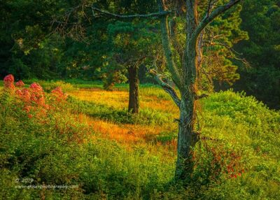 """Summer Woodlands"",  Canon 5D Mk3, 70-200mm f/2.8L Mk2, Singh-Ray Color Combo Polarizer"
