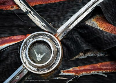 """""""Tattered Bird"""",   Canon 5D Mk3, 24-70mm f/2.8L Mk2, Singh-Ray Color Combo Polarizer"""
