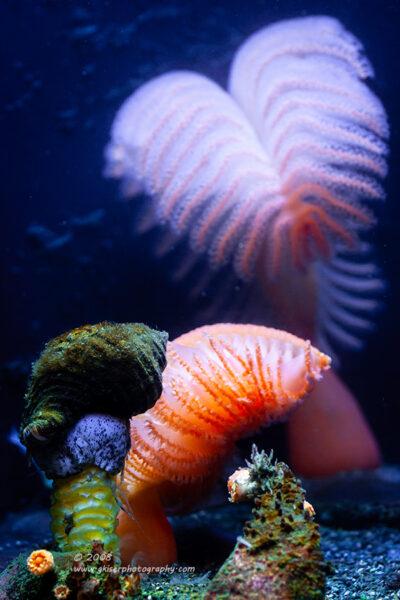 """""""Ocean Colors"""",  Canon 40D, 70-200mm f/4L, No Filters"""