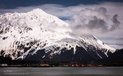 """Seward and the Gull"",   Canon 40D, 70-200mm f/4L, No filters"