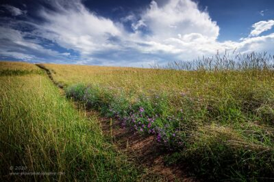 """Lavender Trail"",   Canon 5D Mk3, 16-35mm f/2.8L Mk2, Singh-Ray Color Combo Polarizer, Galen Rowell 2-stop hard ND Grad"
