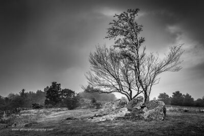 """Welcome Trees"",   Canon 5D Mk3, 24-70mm f/2.8L Mk2, No Filters, Converted to B&W in Lightroom"