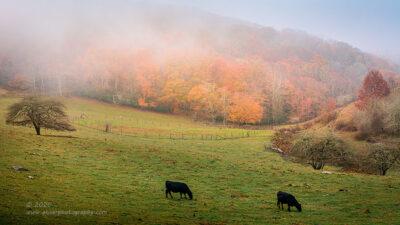 """Autumn Graze"",   Canon 5D Mk3, 70-200mm f/2.8L Mk2, Singh-Ray Galen Rowell 2-stop soft ND grad"