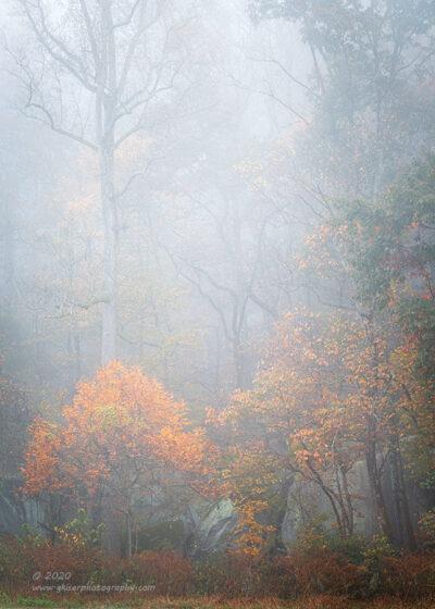"""""""Autumn Mist"""",   Canon 5D Mk3, 70-200mm f/2.8L Mk2, No Filters"""