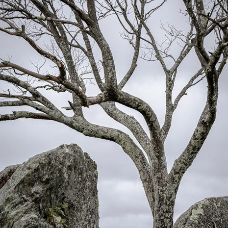 Boulders and Branches