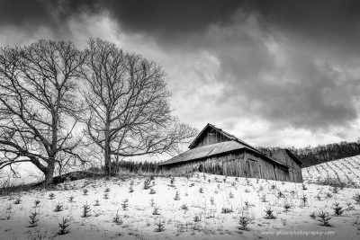 """""""Saplings in the Snow"""",   Canon 5DS R, 16-35mm f/2.8L Mk2, Singh-Ray Color Combo Polarizer, Converted to B&W in Lightroom"""