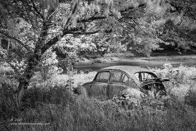 """""""Bug in a Breeze"""",   Canon 5DS R, 24-70mm f/2.8L Mk2, Singh-Ray Color Combo Polarizer, Converted to B&W in Lightroom"""