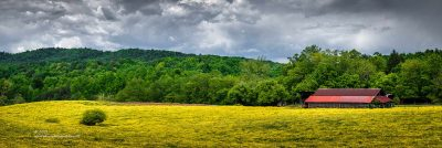 """""""Field of Gold"""",   Canon 5DS R, 70-200mm f/2.8L Mk2, Singh-Ray Color Combo Polarizer, 8 images stitched in Lightroom"""